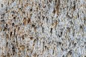 stock photo of scoria  - macro close up of a pumice stone for background texture - JPG