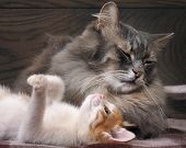 Big Mama cat and small, funny kitten poster