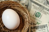 stock photo of nest-egg  - egg in nest with  - JPG