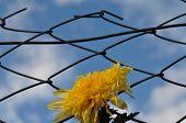 Stranded flower