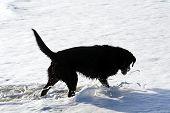 Dog In Foam