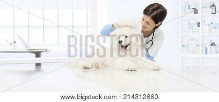 veterinary examination dog