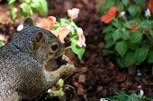 Cute squirrel in the garden