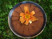Chocolate Cake With Day Lily