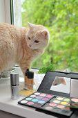 Maquiagem e gato