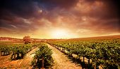 Beautiful scenic vineyard with stormy sunset sky