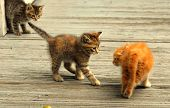 Three Kittens On A Bridge