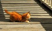 Orange Tabby Baby Kitten On The Bridge