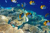 Indian ocean. Underwater world.