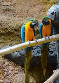 Par de papagaios