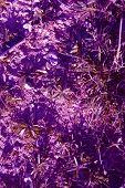A Fantasy Purple Shrub Of Fuzzy Leaves poster