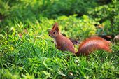 Cute And Furry Squirrel Is Sitting In City Park poster