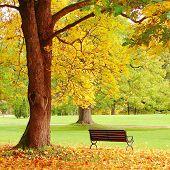 Fall City Park