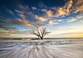 Charleston Sc Coast Botany Bay Ocean Oak Tree Edisto Island