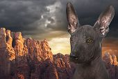 image of mexican-dog  - Portrait of Mexican xoloitzcuintle dog against mountains - JPG
