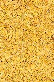 Rice Texture Background
