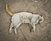 Odd Cat
