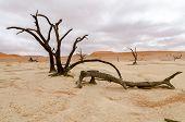 Dead trees in Deadvlei, Namibia