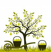 foto of hand-barrow  - vector pear tree and hand barrow with basket of pears - JPG