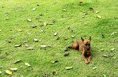 Backyard Dog