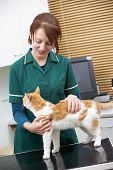 Female Vet Examining Cat In Surgery