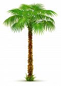 Tropical Palm Tree With Green Leaves Isolated
