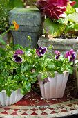 stock photo of viola  - Outdoor flower pots with violas and hydrangea on garden table - JPG