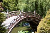 Arc Bridge In The Japanese Garden