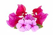 Decorative Isolated Display Of Bright Pink Flowers