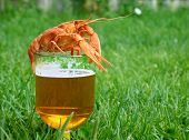 Beer with crayfish in green grass