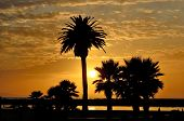 stock photo of southwest  - Sunset and palm trees at Newport Beach in the southwest part of Los Angeles CA - JPG