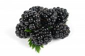Mulberries Isolated