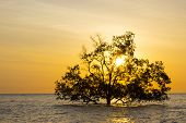 Tree In Sea