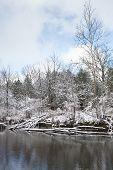 Frosty Winter Scene Vertical