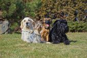 A Group Of Four Dogs Of Different Breeds