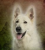 Close-up of a White Swiss Shepherd Dog panting on a vintage colored background