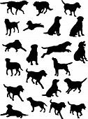 stock photo of labradors  - vector silhouettes of Labrador dog in various poses - JPG