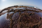 Rock Shelf Pools Ocean Seas