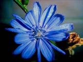 Blue Flower, Petal, Vegetation, Background, Texture