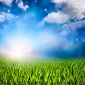 Sunlit Grassland