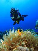 Scuba Diving with Nemo fish