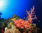 Corals, Anemones and Clownfish underwater in ocean