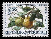AUSTRIA - CIRCA 1972: A stamp printed in Austria, devoted to the International Garden Show, Vienna,