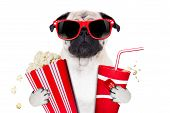 image of pop star  - cinema movie tv watching pug dog isolated on white background with popcorn and soda wearing 3d glasses - JPG