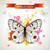 Apollo butterfly over bright background