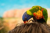 Colorful Parrot On Head