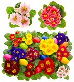 Primula Flowers With Easter Eggs Decoration