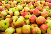 Heap Of Apples From Close