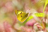 Beautiful yellow butterfly sitting on a leaf