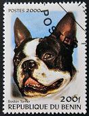 BENIN - CIRCA 2000: A stamp printed in Benin shows a dog Boston Terrier circa 2000